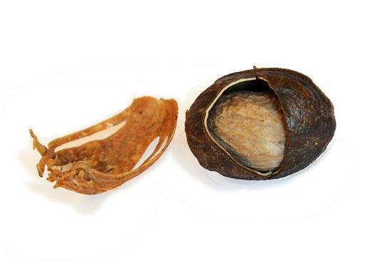 Noix de muscade et macis aliments lexique for Noix de muscade cuisine